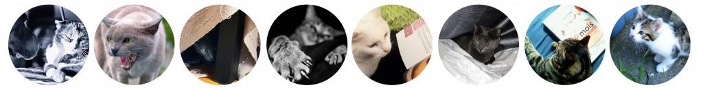 comportement du chat_ Marion Ruffié, comportementaliste spécialiste du chat