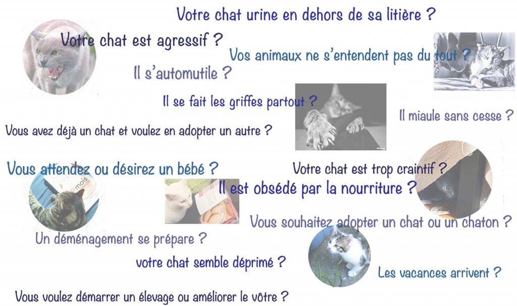problemes de comportement2_ Absolument Chats