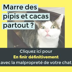 en finir avec la malproprete de votre chat- chat fait pipi partout- absolument chats- Marion Ruffie - comportement felin